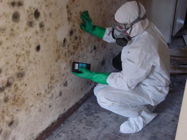 Image result for mold remediation